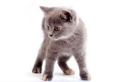 Grey kitty Stock Photo