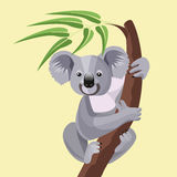 Grey koala bear isolated on wood branch with green leaves Royalty Free Stock Photography