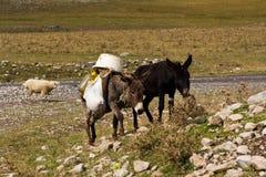 Grey laden donkeys in field Stock Photos