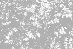 Grey leaves background Royalty Free Stock Image