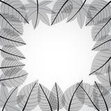 Grey leaves frame Royalty Free Stock Photography