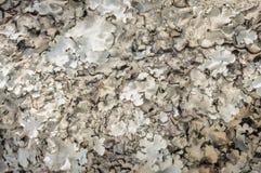 Grey lichen in rain forest. Stock Photos