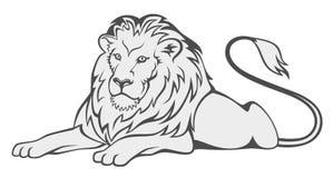 Grey lion Stock Photos