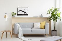 Grey lounge with cushions and blanket standing in real photo of. White living room interior with fresh plants, map poster and wooden end table royalty free stock photos