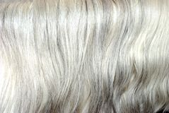 Grey mane hair background Royalty Free Stock Image