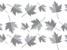 Grey maple leaf vector seamless pattern for wallpaper, background, cover, greeting card, fabric textile Stock Photo