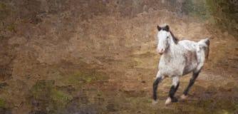 Grey Mare die in Badlands lopen stock illustratie