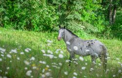 Free Grey Mare In The Green Royalty Free Stock Images - 190402099