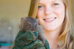 Grey mongoose rescued from traditional African Stock Photo