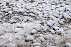 Grey moss Royalty Free Stock Photo