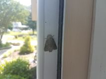 Grey moth insect with wings on inside of door. A grey moth insect with wings on inside of door stock photo