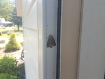 Grey moth insect with wings on inside of door. A grey moth insect with wings on inside of door royalty free stock photos