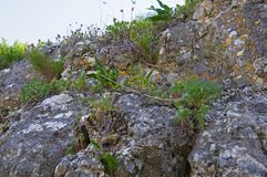 Grey mountain rocks with green plants, spring time. Spain royalty free stock photography
