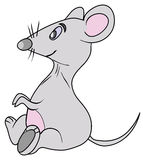 The grey mouse. With pink belly Royalty Free Stock Image