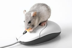Grey mouse Royalty Free Stock Photography
