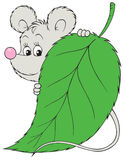 Grey mouse Stock Photography