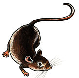 Grey mouse Stock Image