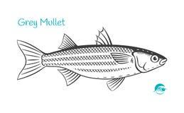 Grey Mullet hand-drawn illustration. Detailed hand drawn vector black and white illustration of Grey Mullet fish stock illustration