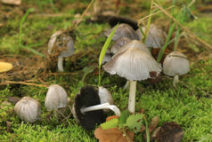 Grey Mushrooms Stock Images