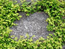 Natural stone and spring plants, Lithuania Royalty Free Stock Photo
