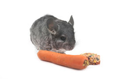 Grey nice chinchilla Stock Photography