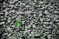 Grey och Green Royaltyfria Bilder