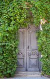 Grey old door with ivy. Grey wooden old door on background of wall with ivy Royalty Free Stock Photos