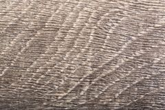 The grey old wood bog oak . Texture. The grey old wood bog oak. High quality texture on macro Stock Photos