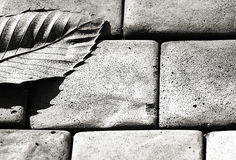 Grey - One Leaf. B&W High Key image of a single dried leaf that has fallen onto concrete bricks. The contrast between man and nature is emphasised stock photo