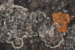 Grey and orange lichen. Patterns a rough granite rock stock photos