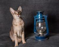 Grey Oriental-Katze und -laterne auf Weihnachten oder neuem Jahr stockfotografie