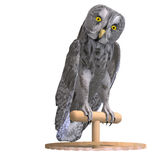 Grey Owl Bird. 3D rendering with clipping path and shadow over white Royalty Free Stock Image