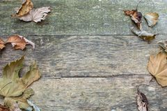 Pallet Wood Background with Leaves On Both Sides. Grey pallet wood background with dry leaves on both left and right sides stock image