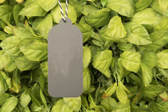 Grey paper price tag hanging on green tree. Grey paper price tag hanging on green tree with copy space for some text, advertise, promotion, sale  concept Royalty Free Stock Images