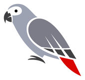 Grey Parrot Photographie stock
