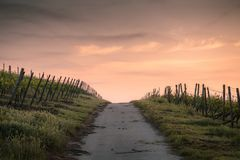 Grey Path Way Between Green Grass during Daytime Royalty Free Stock Images