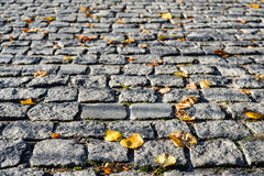 Grey pavement stone background. Autumn leaves on a stone pavement or walkway. Stock Images