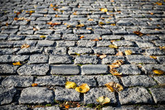 Grey pavement stone background with black out edges. Autumn leaves on a stone pavement or walkway. Royalty Free Stock Images