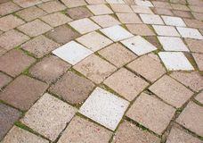 Grey pavement tiles with moss Stock Images