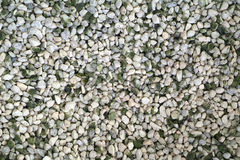 Grey Pebble texture background Royalty Free Stock Images
