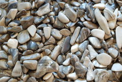 Grey pebbles. Stone background, natural minerals Stock Image