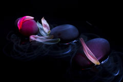 Hot stone massage pink with white flower petals. Pink illuminated grey pebbles on water with beautiful flower petals and black background Royalty Free Stock Images