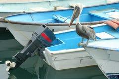 Grey Pelican on boat Western Mexico. Grey Pelican on boat dock in Western Mexico Royalty Free Stock Photo