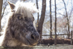 Grey Pony Stock Images