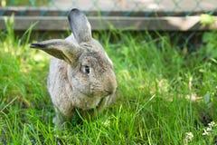 Grey pretty rabbit on grass background. Outdoor Stock Photos