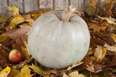 Grey Pumpkin Royalty Free Stock Photo