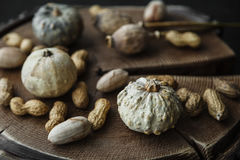 Grey pumpkin, nuts and dry poppy heads on wooden background Stock Photo