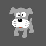 Grey Puppy Schnauzer Stock Photography