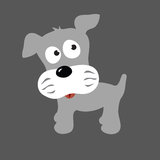 Grey Puppy Schnauzer Stock Photos