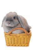 Grey rabbit in a basket isolated on white Royalty Free Stock Photos